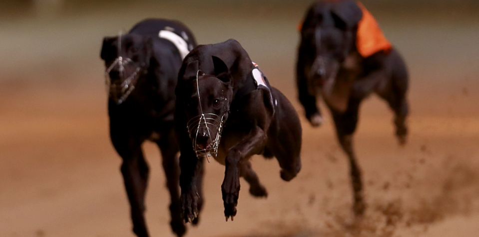What are the tips to bet on dog races
