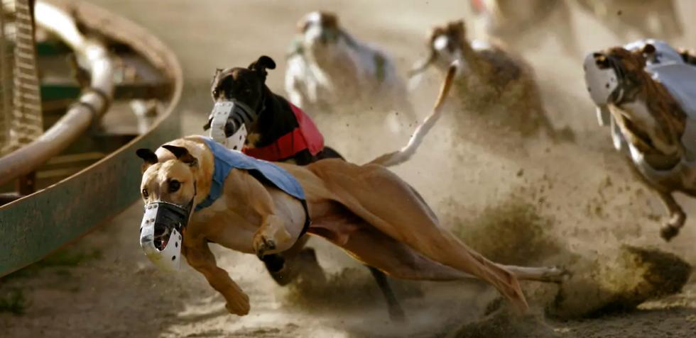 dog betting website
