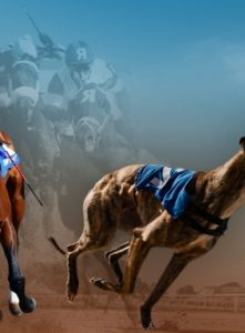 What is the difference between horse and dog racing?