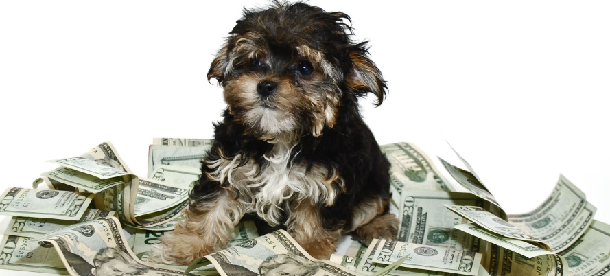 cost of owning a dog