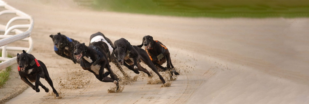What is the difference between virtual and live dog racing?