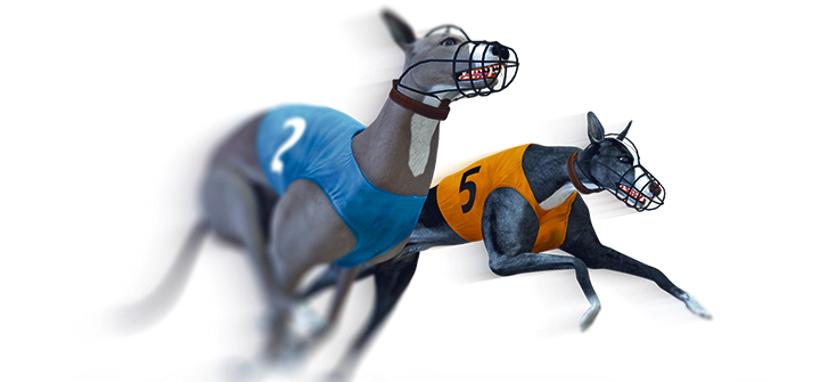 virtual dog racing